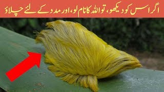Top Dangerous and Poisonous Animals in the World - Amazing Pakistan in Urdu & Hindi