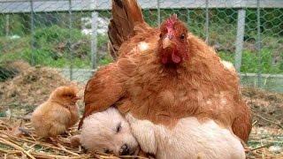 Думают ли животные? - научно-популярный фильм (СССР)