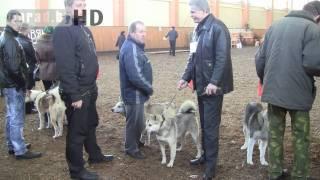 Могилёв. Чемпионат собак охотничьих пород.
