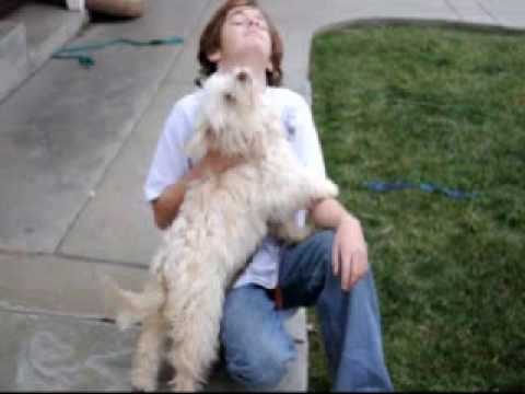 the dog spot rescue