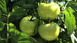 Knaus Berry Farm: Homestead, Florida