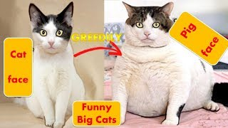 Top funny pets and animal videos compilation [Part 5]Try not to laugh [Funny pets channel ]