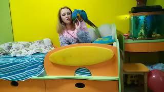 Содержание большого попугая в квартире 1 серия