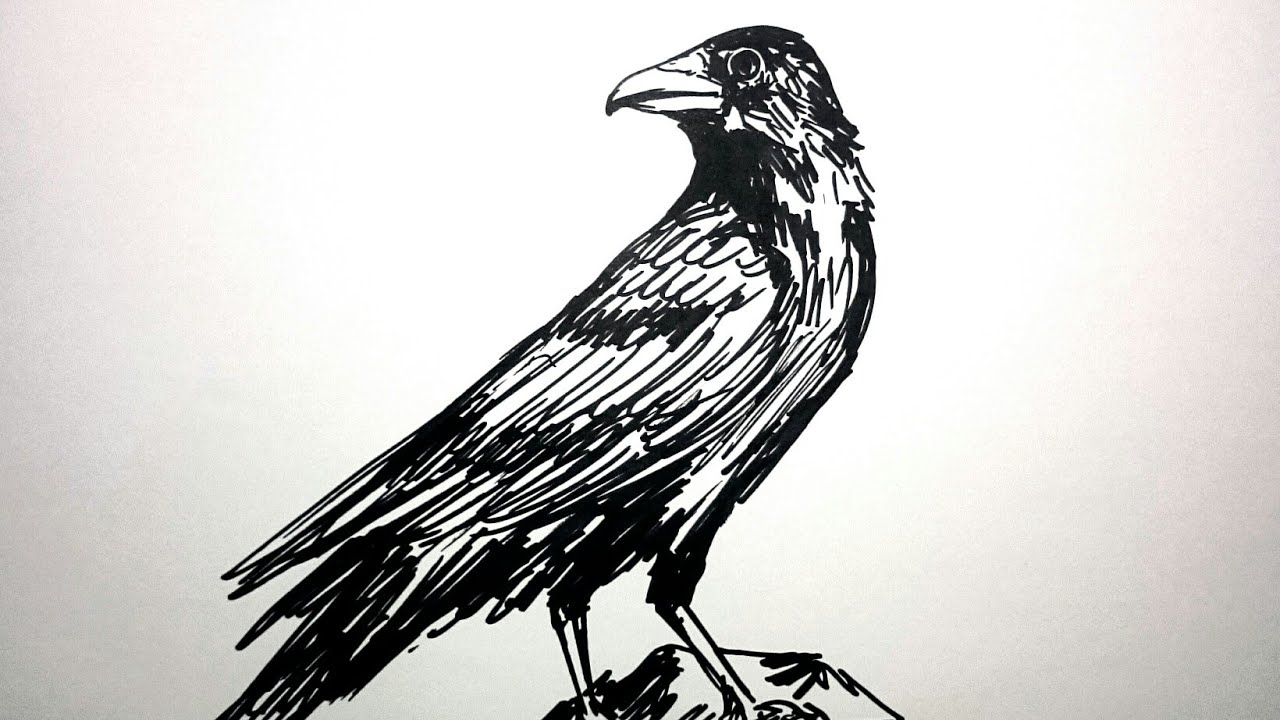 Cara Menggambar Burung Gagak Dengan Mudah Youtube