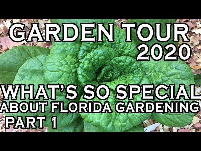 5 reasons we garden (in FL) - Inspirational garden video - Natural Gardening basics for beginners