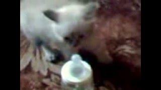 смотреть всем кота плющит от бутылки