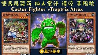 【遊戲王 Duel Links 】517 仙人掌鬥士Cactus Fighter 阿特拉的蟲惑魔Traptrix Atrax 蒂奧的蟲惑魔Traptrix Dionaea