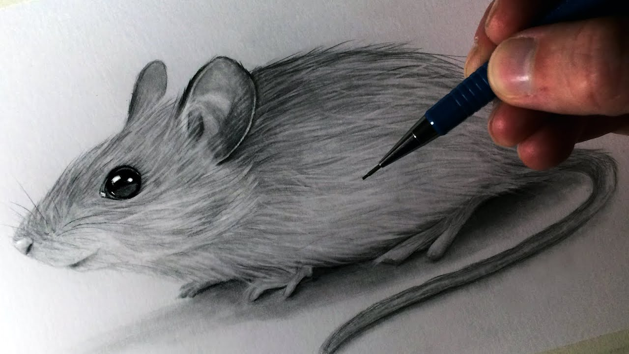 How to draw a mouse youtube for How to draw with a mouse