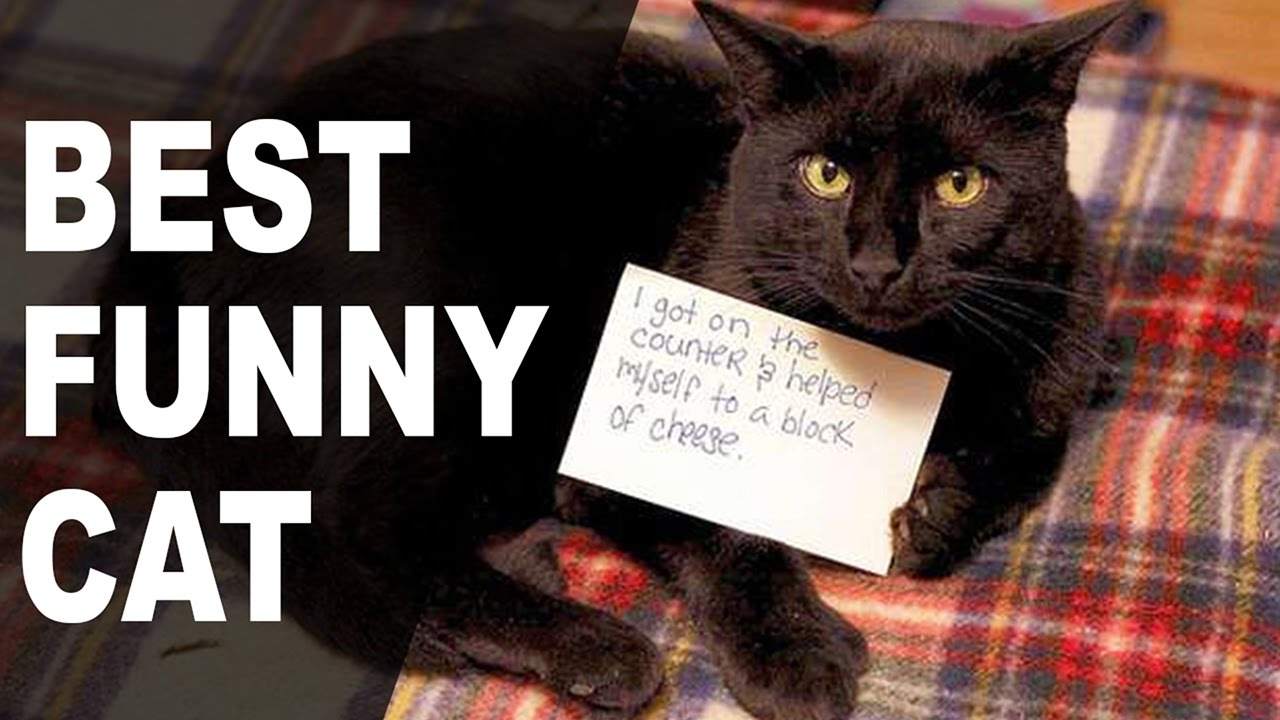 The Best Funny Cat Shaming Pictures on the Internet-Kitty ...