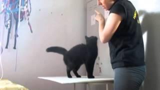 """Обучение кошки команде """"сидеть!""""."""