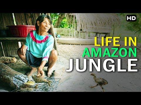 घने जंगलोमें भी होती हे इनसानीं बस्ती    Life In Amazon Jungle