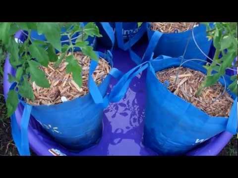 The Self Watering Kiddie Pool Grow System!   YouTube