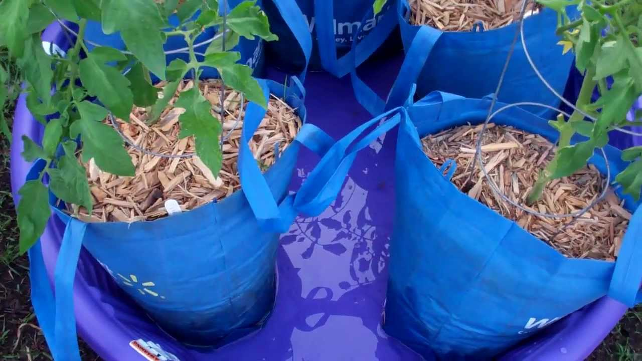 The Kiddie Pool Sub-Irrigated Planter? Crazy Idea? Well maybe not!