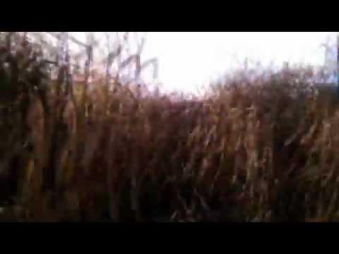 Corn Maze Dub Step