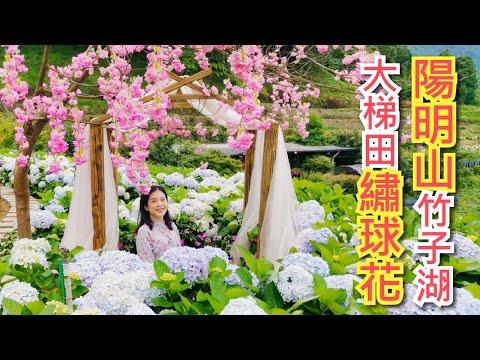 2020陽明山竹子湖繡球花季,帶你走入大梯田跟人一樣高的花牆、還有藝術造景可以拍美照