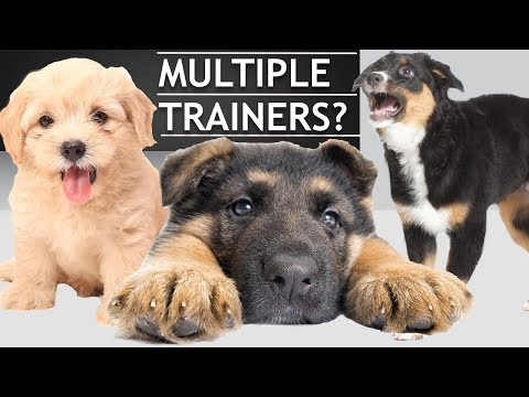 How To Train a Dog When You Live With Other People