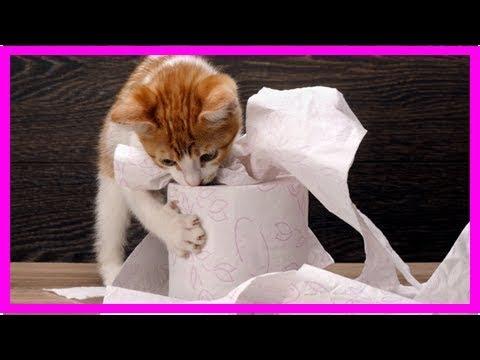 6 Fehler in der Katzenerziehung, die Sie vermeiden sollten