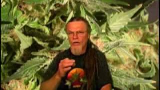 Marijuana Flowering Tip Of The Day