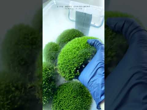 Satisfying Live Moss Cultivation Process by TerraLiving