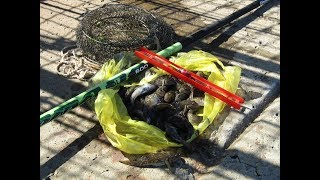 Рыбалка маховой удочкой на Азовском море. Бычек-икрянчик
