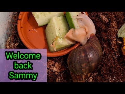 Welcome back Sammy #stevesfamilyvlogs