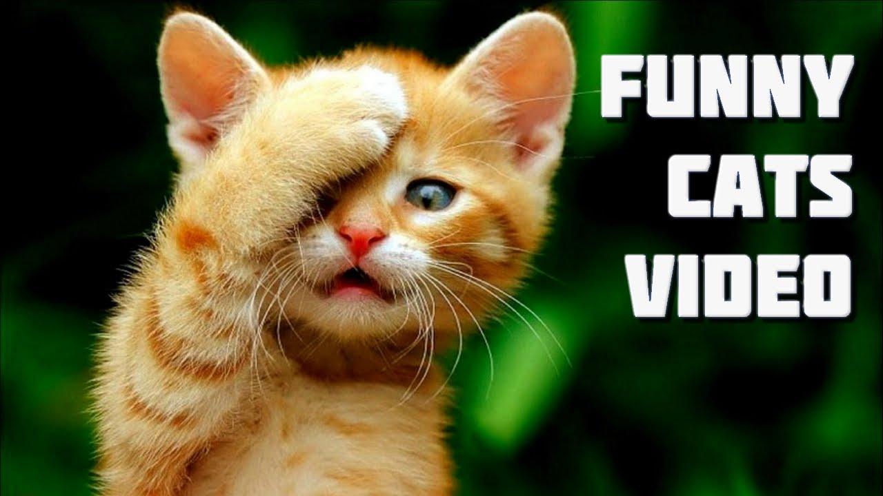 Funny Cats Youtube