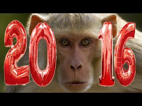 Поздравление с 2016 новым годом, обезьяны!