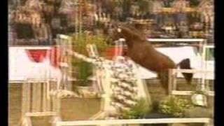 horses equestrian a fantastic world