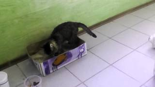 Кот и туалет