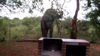 Elephant destroys fence at Kruger 20 feet away in 9 seconds