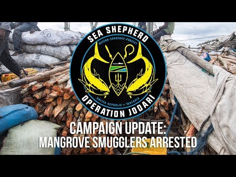 Campaign Update: Mangrove Smugglers Arrested