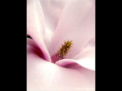 Magnolia ~ J.J. Cale