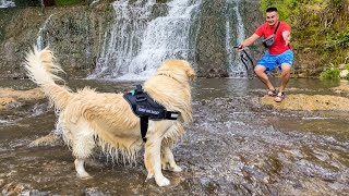 Golden Retriever First Time at the Waterfall