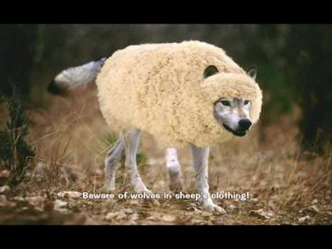 Image result for picture  wolf in sheeps clothing Bible