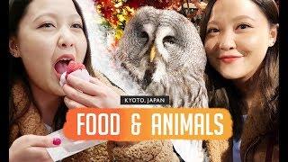 KYOTO | Food & Animals in Kyoto
