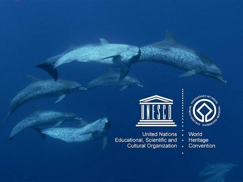 UNESCO's Marine World Heritage (Portuguese)