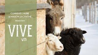 Dans notre émission Vive cette semaine : https://maisonjacynthe.ca/fr/blog/vive-web-saison-3-episode-5/ -échange avec Sylvain sur comment se la jouer facile ...