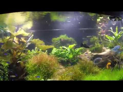 Свет для аквариума . LED светильник. Диодный свет