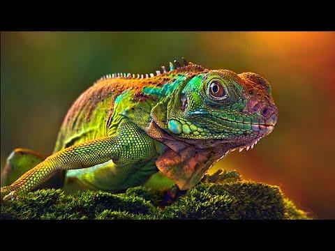 ЖИЗНЬ ЖИВОТНЫХ: Пресмыкающиеся Ящерицы | АУДИОКНИГИ