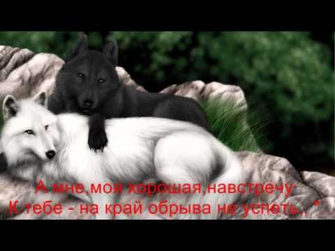 Любовь волков