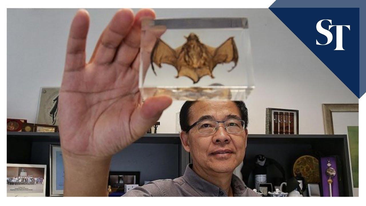 Duke-NUS don: Coronavirus vaccine won't be ready soon | The Straits Times thumbnail