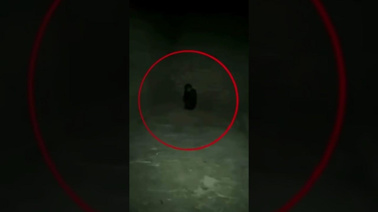 Hiding Ghost ☠️☠️☠️