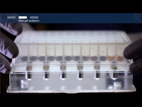 How To Isolate Total RNA Using Magnetic Bead–based Technology