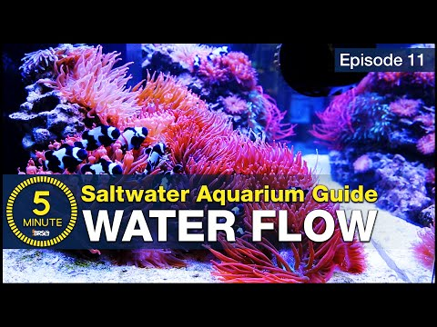 How to choose powerheads and get flow right the first time. Saltwater Aquarium Flow