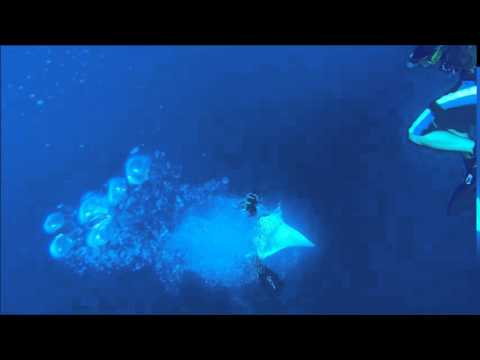 Manta in the Red Sea :)