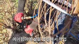충북 옥천 - 홍도화 묘목 굴취
