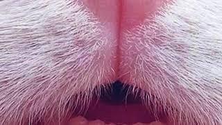 Nothing But, TONGUE CLICKING — ART ASMR Tongue Clicking You To Sleep