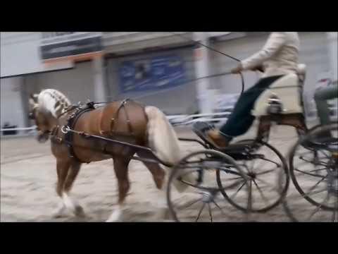 Helsinki Horse Fair 2017