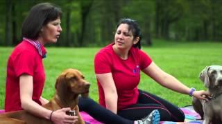 Rogue Dog - A Fun Guide To Canicross