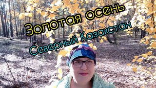 Вырвалась из дома,гуляю в лесу!Восхитительная прогулка в осеннем лесу!
